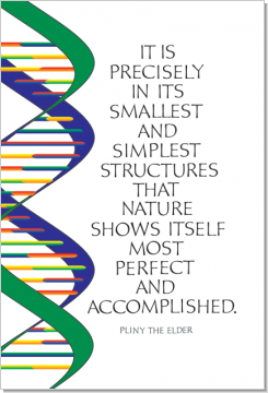 DNA, Pliny the Elder, Calligraphy Art Plaques, Inspirational Gifts